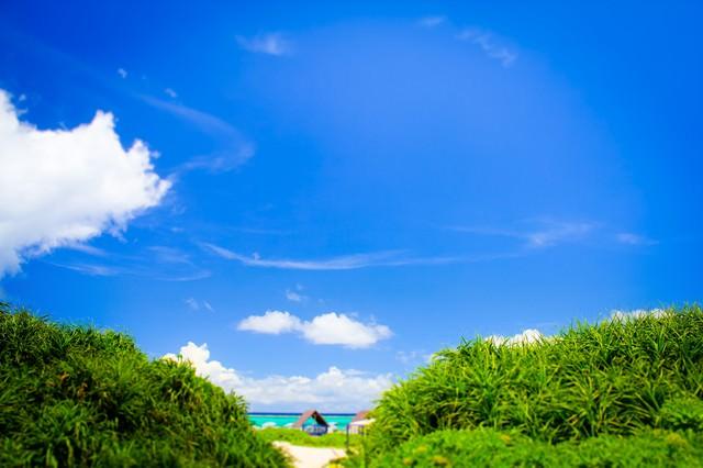 晴れたビーチの写真
