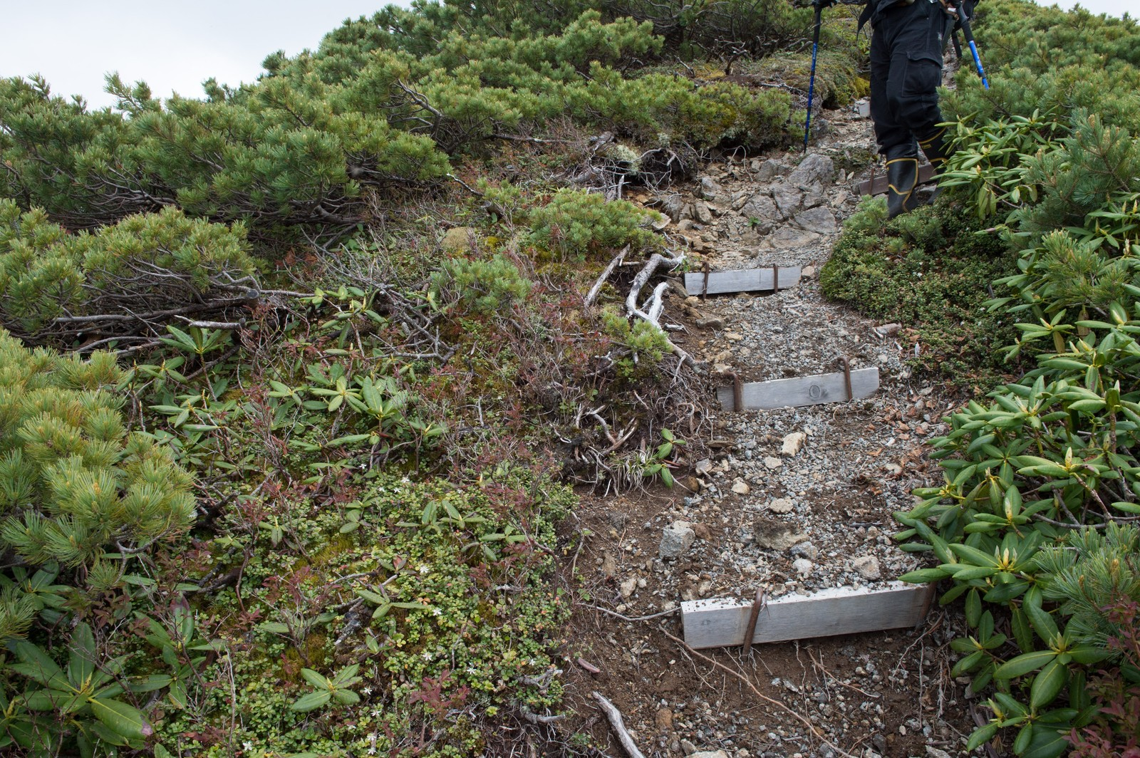 「登山道整備が必要な木材の階段」の写真
