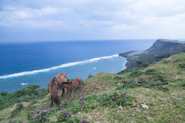 「与那国島東崎展望台」のフリー写真素材