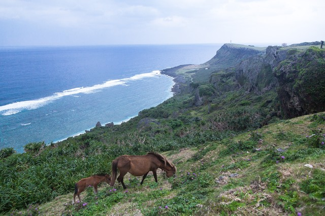 大自然と与那国馬の写真