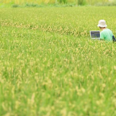 いいアイディアが出ないものかと田んぼで企画書をつくるディレクターの写真