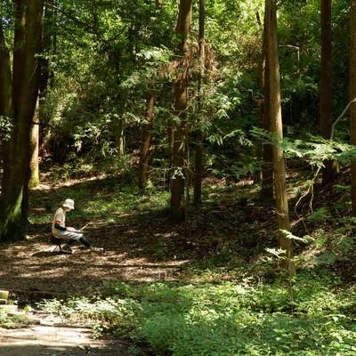 「静寂な森の中で集中してコードを書く伝説のエンジニア」の写真素材