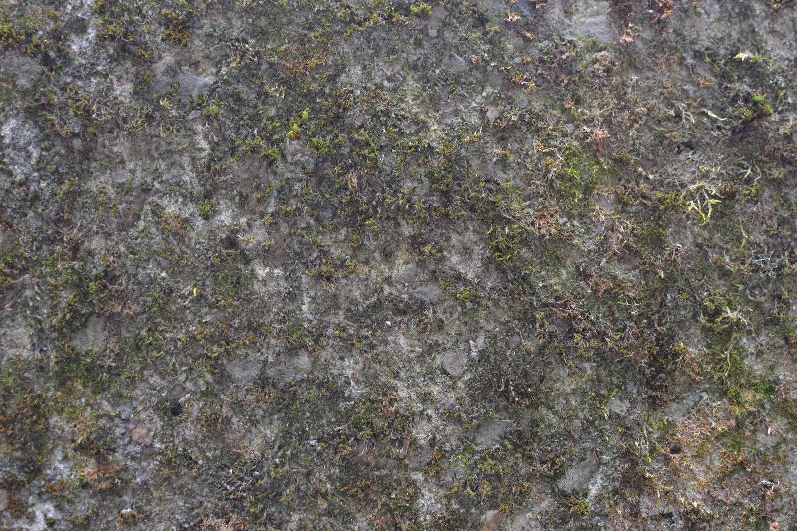 「コケが生えた地表」の写真