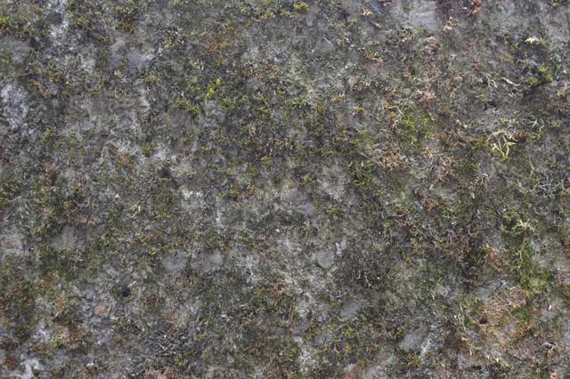 コケが生えた地表の写真