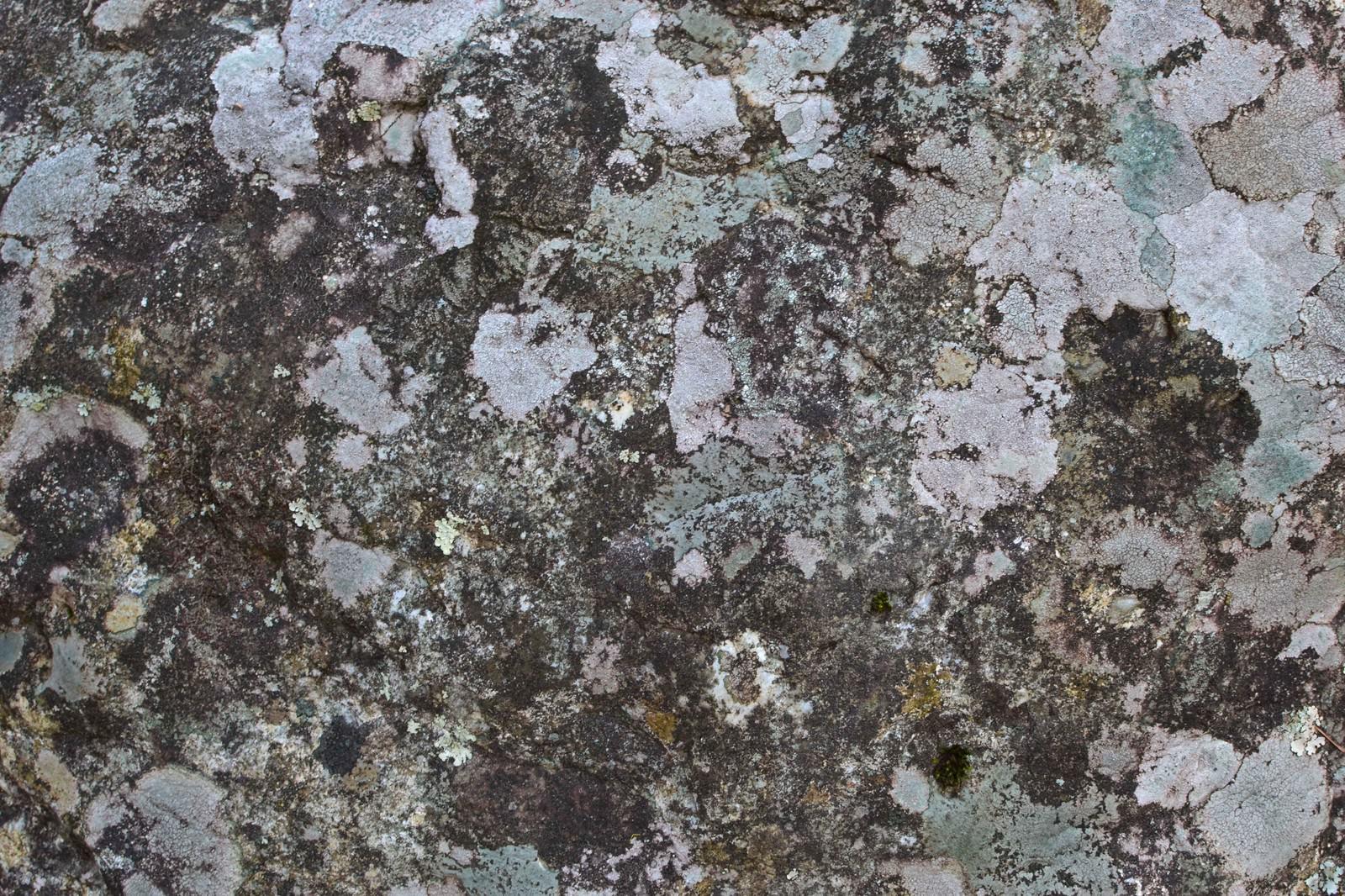 「カビた樹皮のテクスチャ」の写真