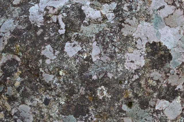 カビた樹皮のテクスチャの写真