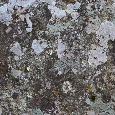 「カビた樹皮のテクスチャー」の写真素材