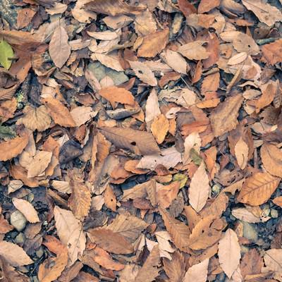 「足元の落ち葉」の写真素材