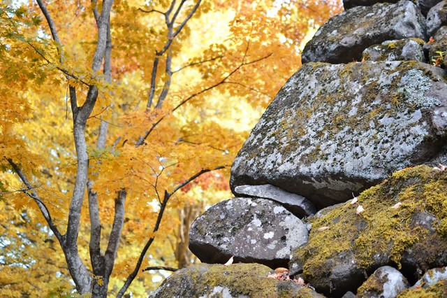 石垣と黄葉の写真