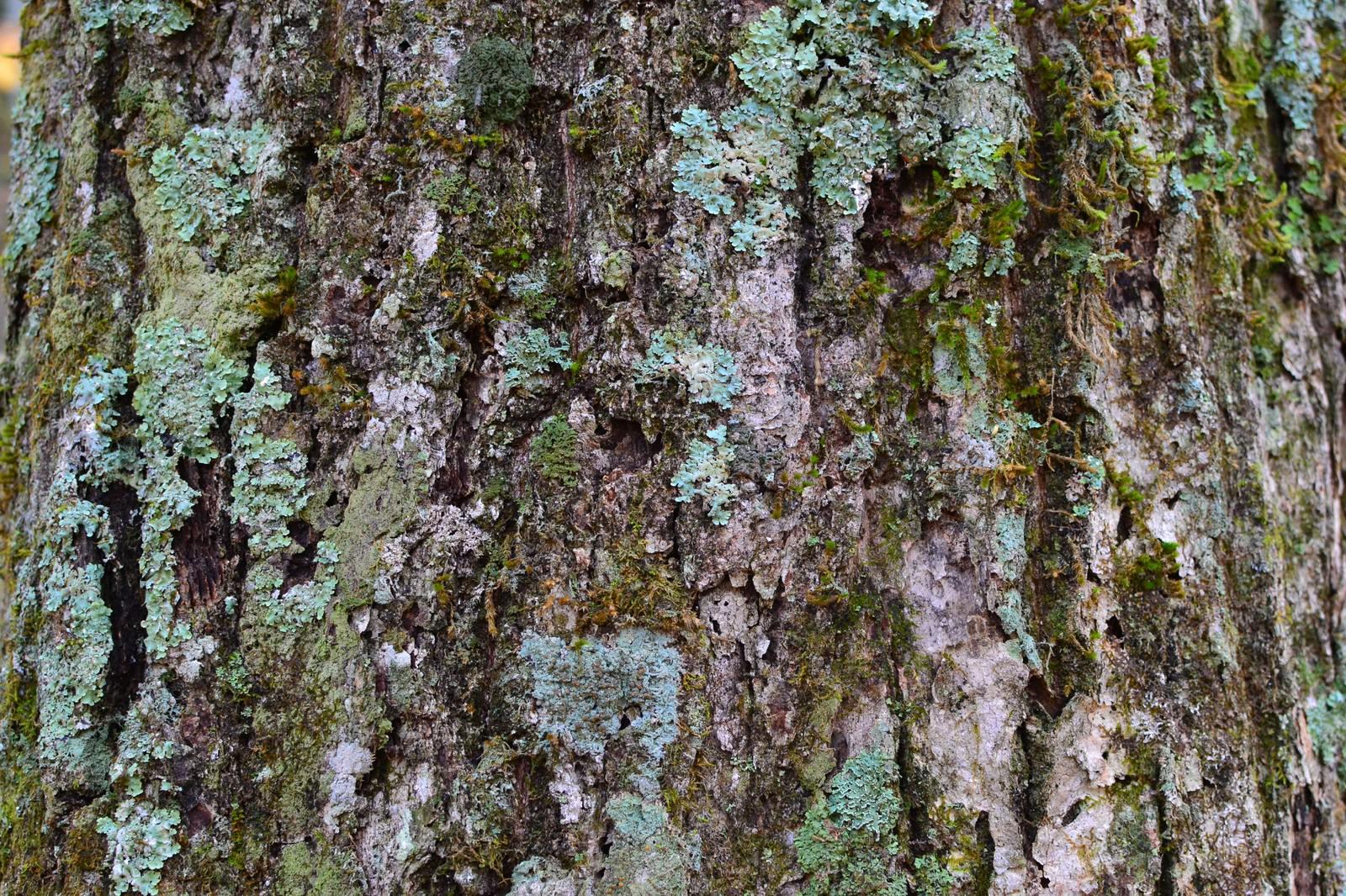 「腐りかけの樹皮(テクスチャ)」の写真