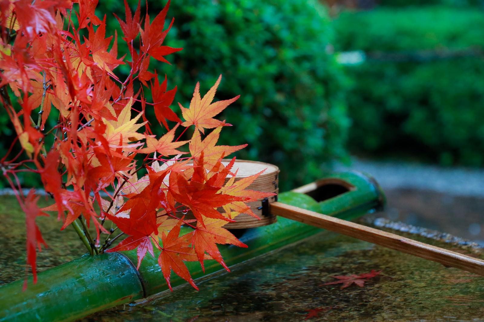 「もみじの葉と手水舎」の写真