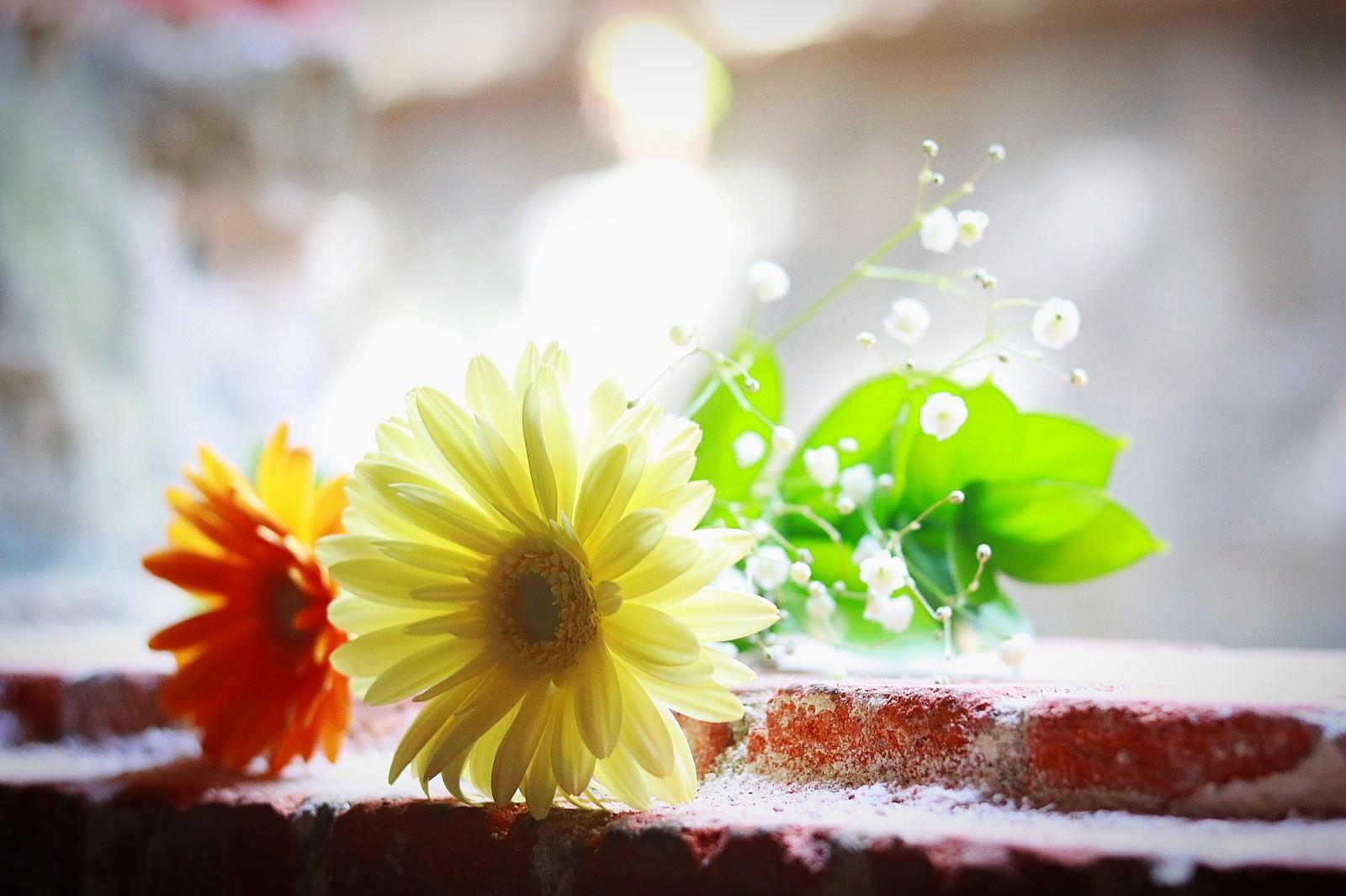 「照明に照らされた小さな花束」の写真
