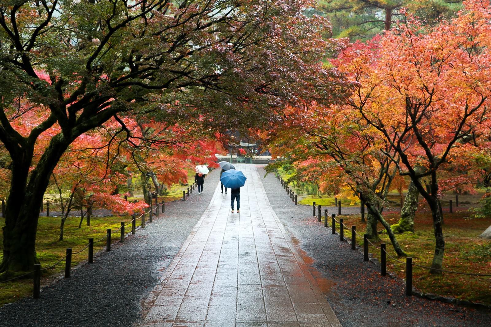 「色づく紅葉と雨の境内」の写真