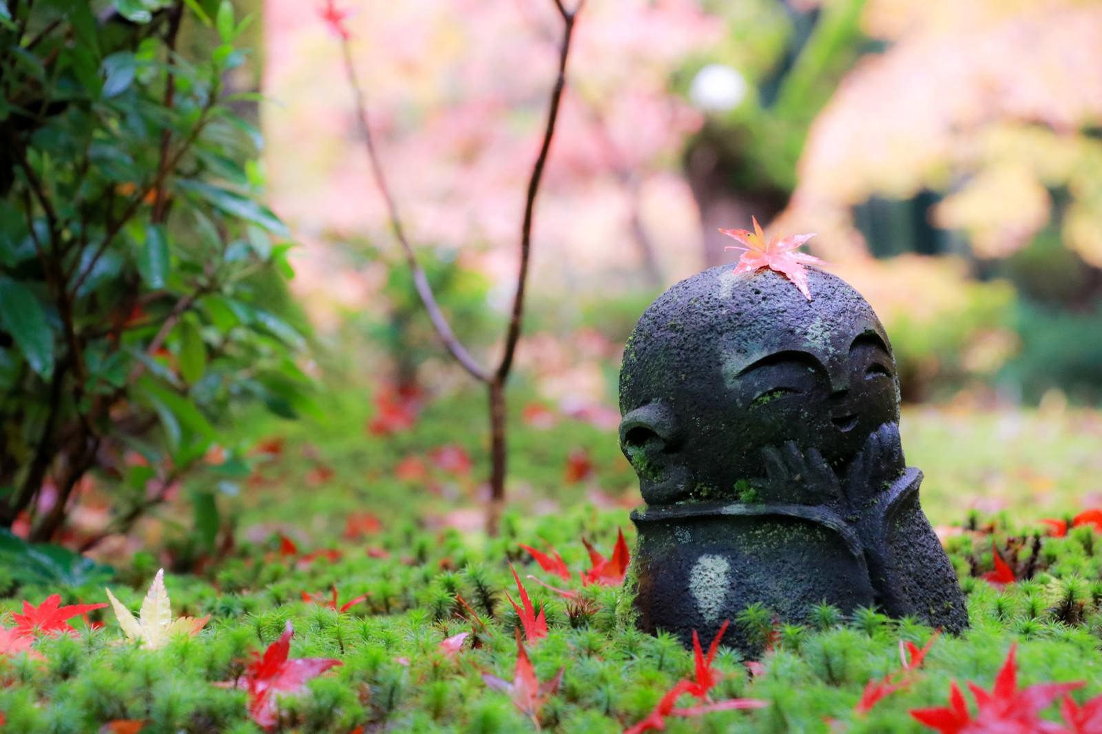 「京都の紅葉と圓光寺のお地蔵さん」の写真