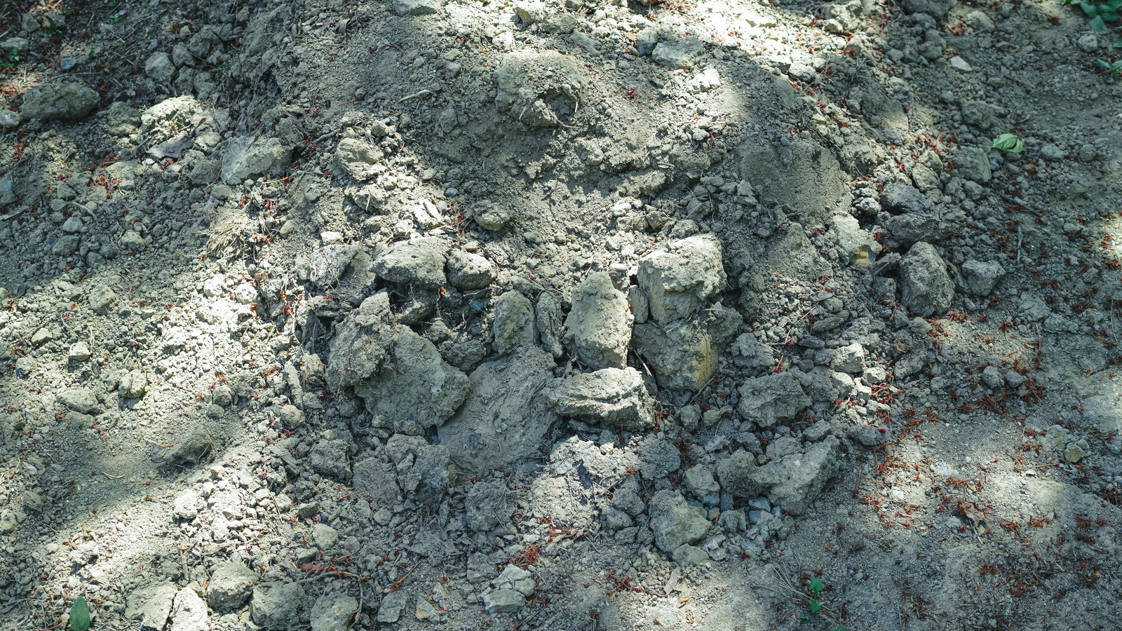 「乾燥した土と木陰」の写真