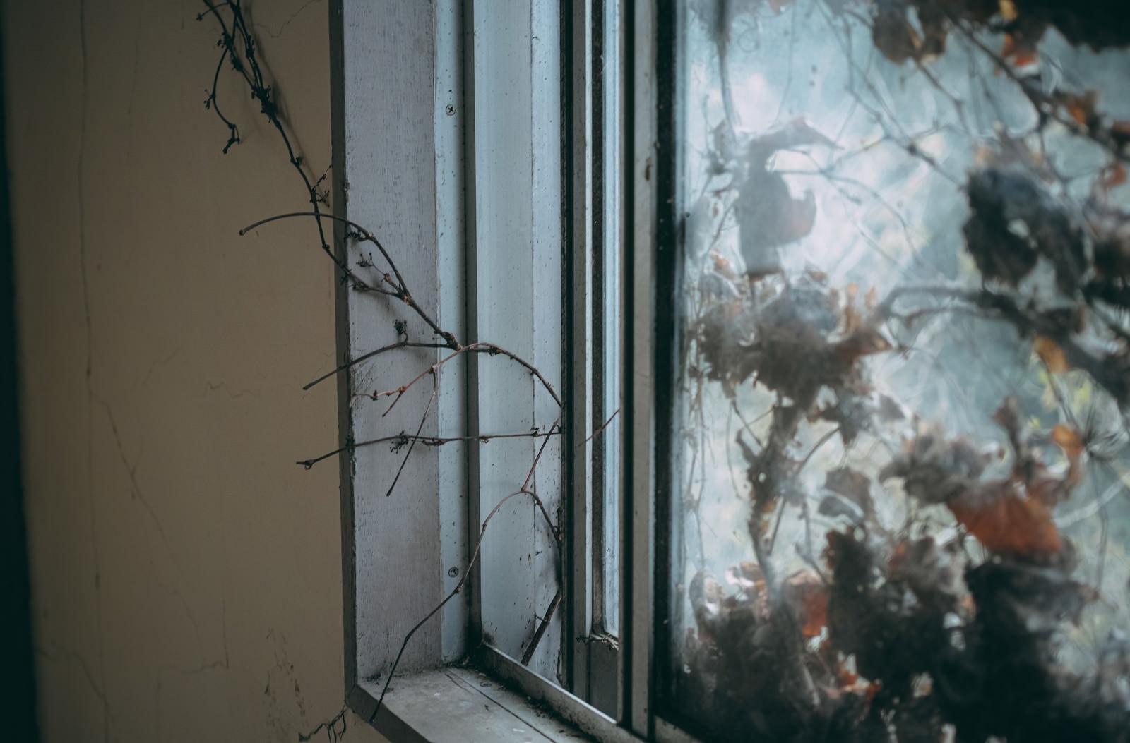 「屋外から屋内に伸びる蔦」の写真