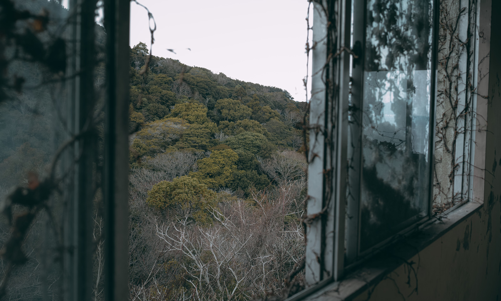 「逃げ場の無い景色」の写真