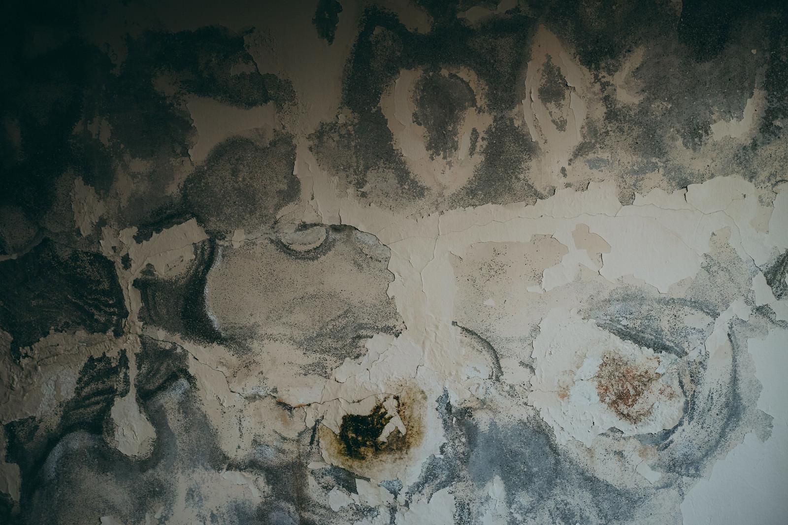 「呪いのようにペンキが剥がれた壁(テクスチャ)」の写真