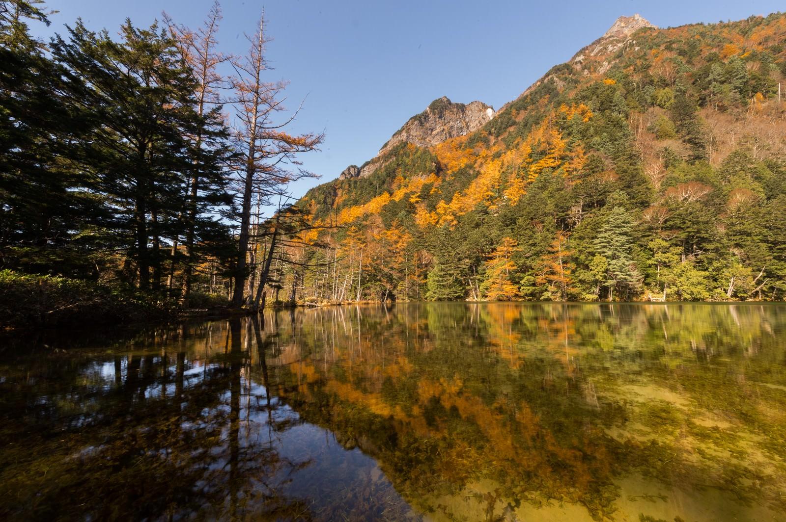 「澄み渡る秋の明神池」の写真