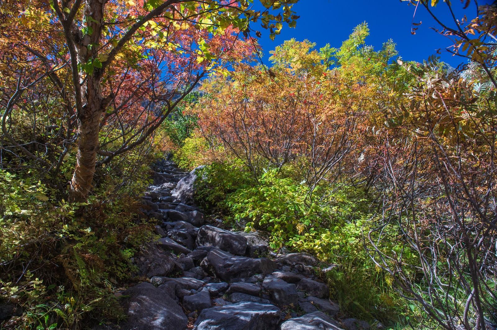 「色彩のトンネルを歩いた先にある涸沢カール」の写真