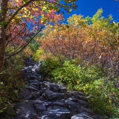 「色彩のトンネルを歩いた先にある涸沢カール」の写真素材