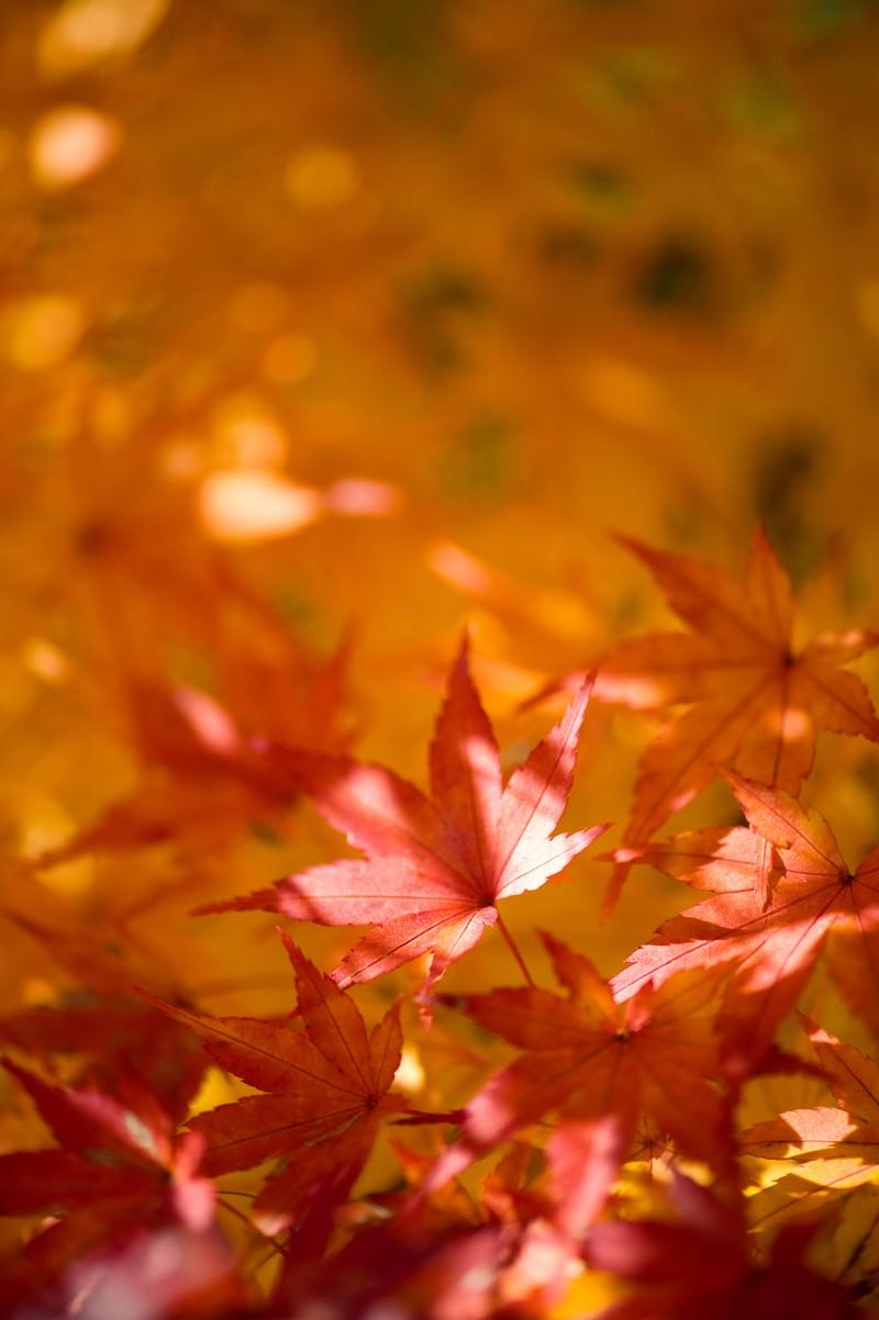 「色づく紅葉」の写真