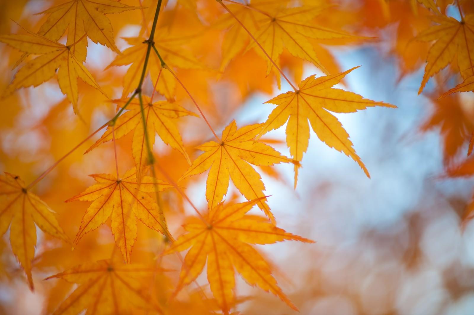 「紅葉の季節紅葉の季節」のフリー写真素材を拡大