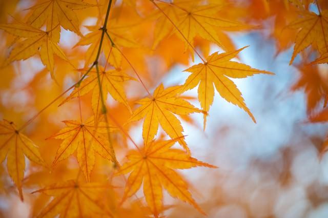 「紅葉の季節」のフリー写真素材