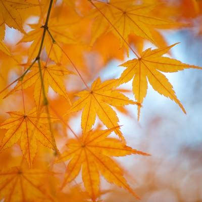 紅葉の季節の写真