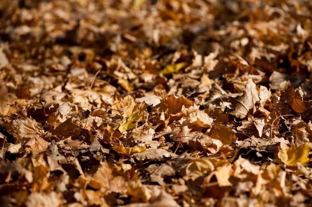 枯葉色の写真