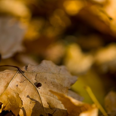 落ち葉と枯れ葉の写真