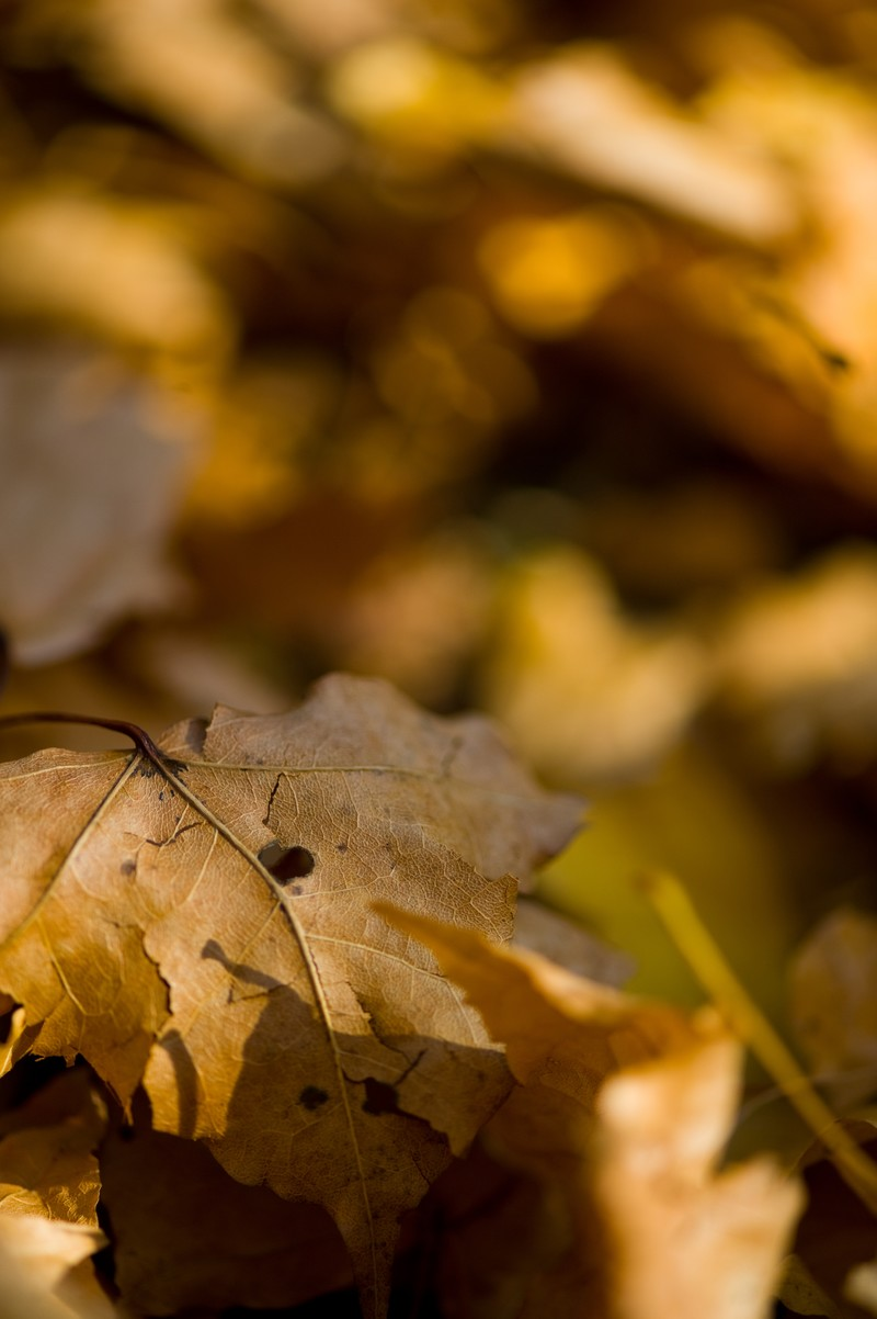 「落ち葉と枯れ葉」の写真