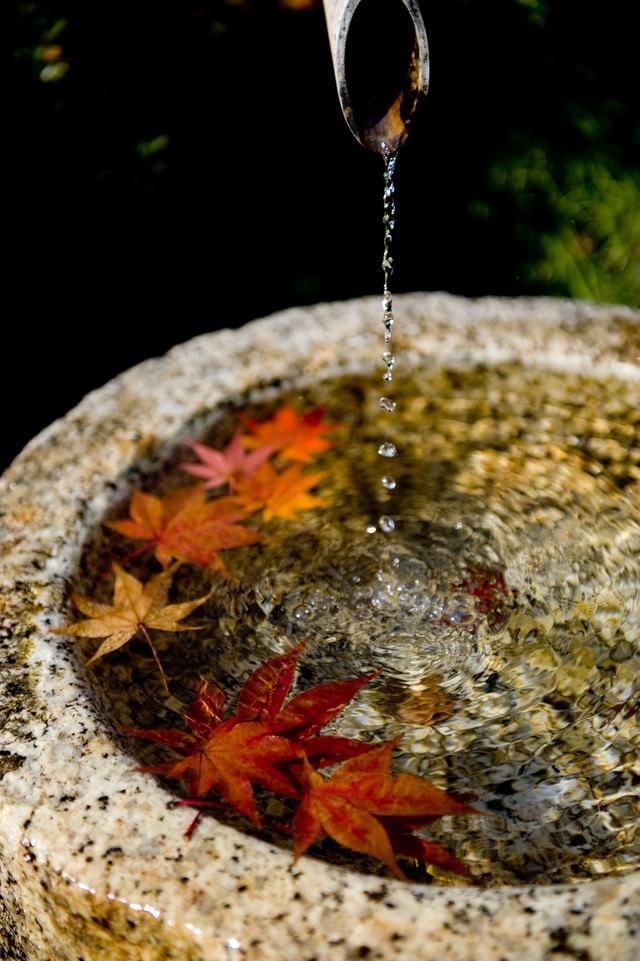 「紅葉と水滴紅葉と水滴」のフリー写真素材を拡大