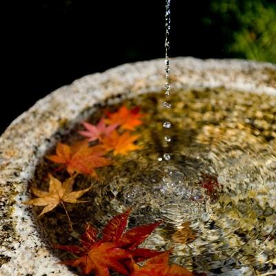 紅葉と水滴の写真