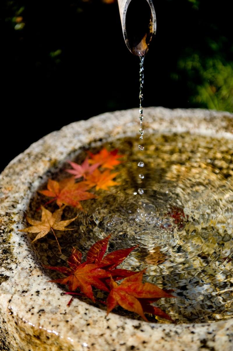 「紅葉と水滴」の写真