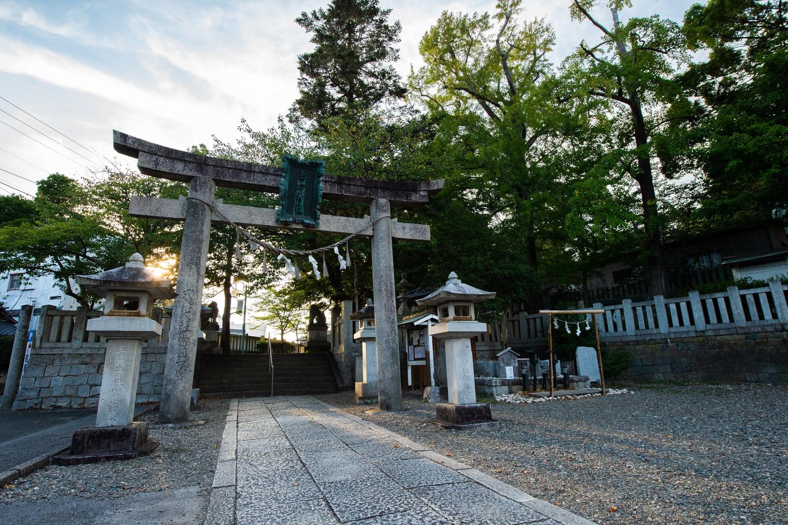 「玉前神社の鳥居に射す光(千葉県一宮町)」の写真