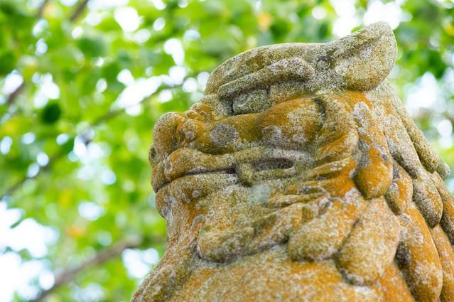 玉前神社にある狛犬の表情(千葉県一宮町)の写真
