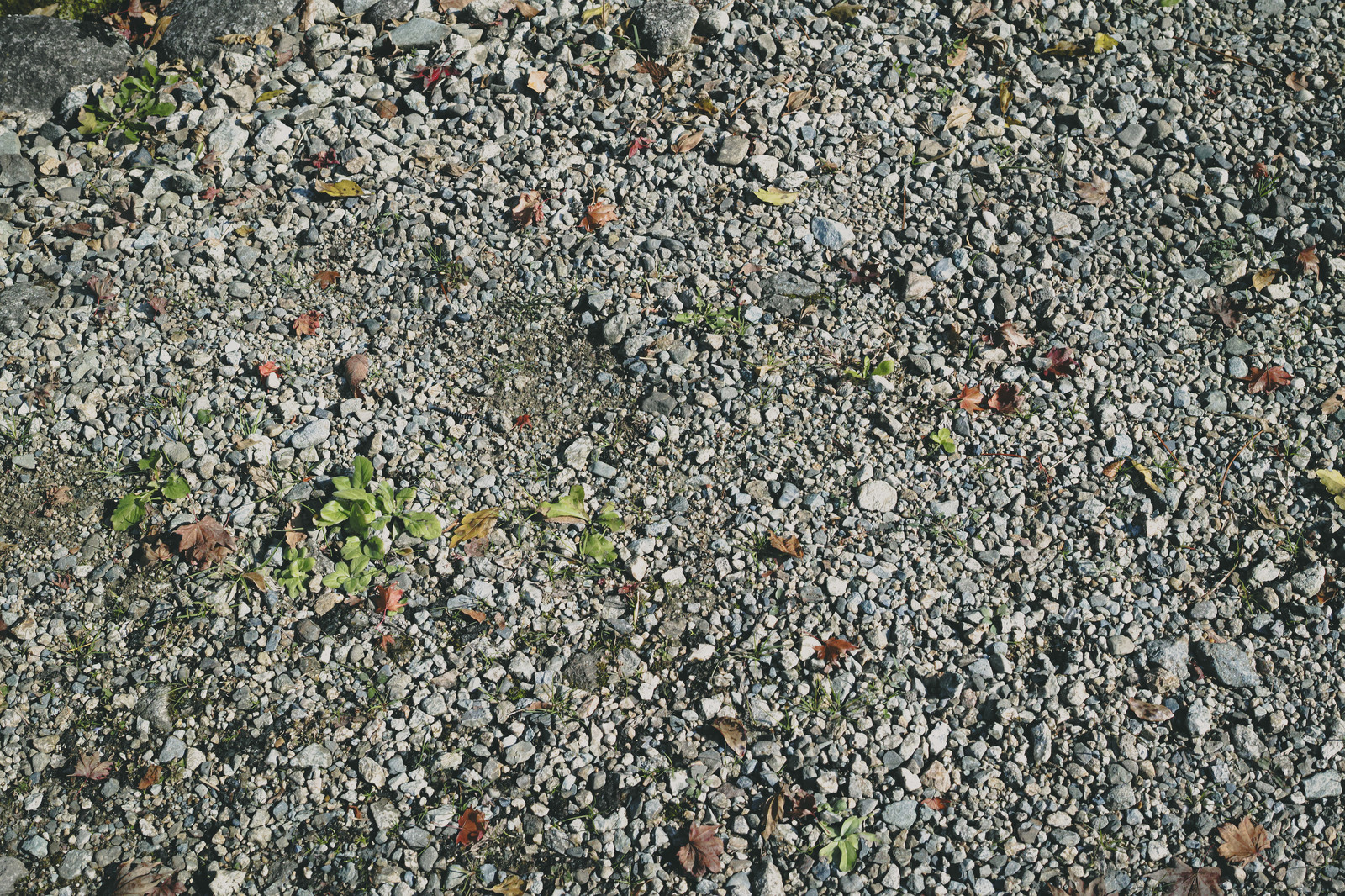 「砂利と地面(テクスチャ)」の写真