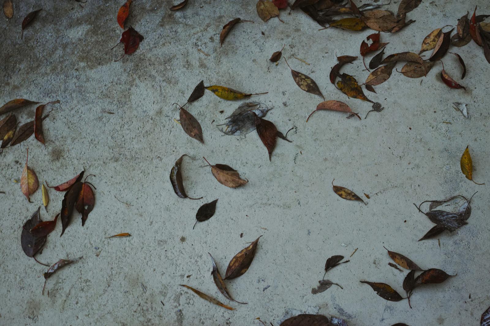 「コンクリートの地面に張り付いた落ち葉(テクスチャ)」の写真