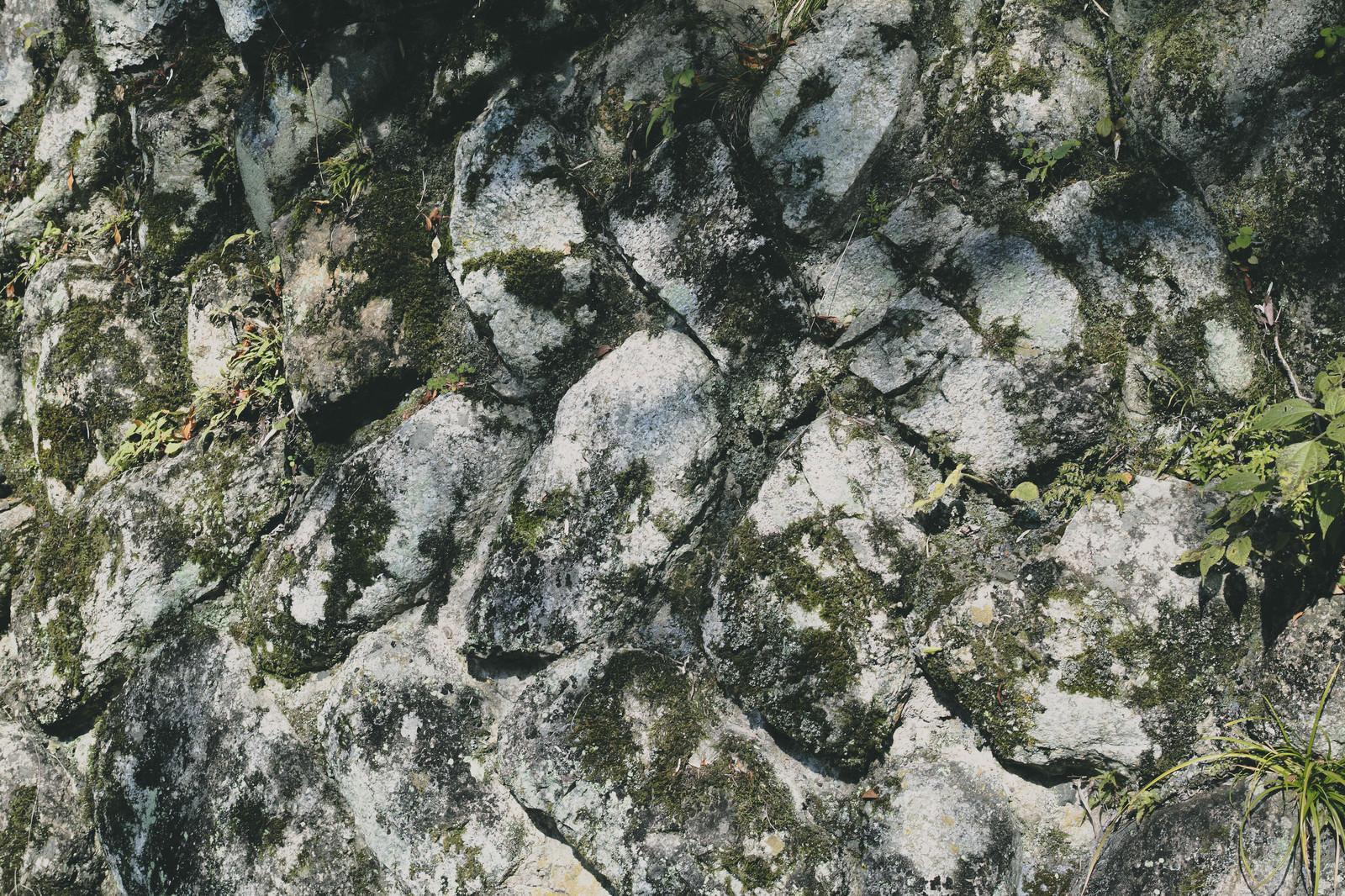 「苔がこびりつく壁(テクスチャ)」の写真