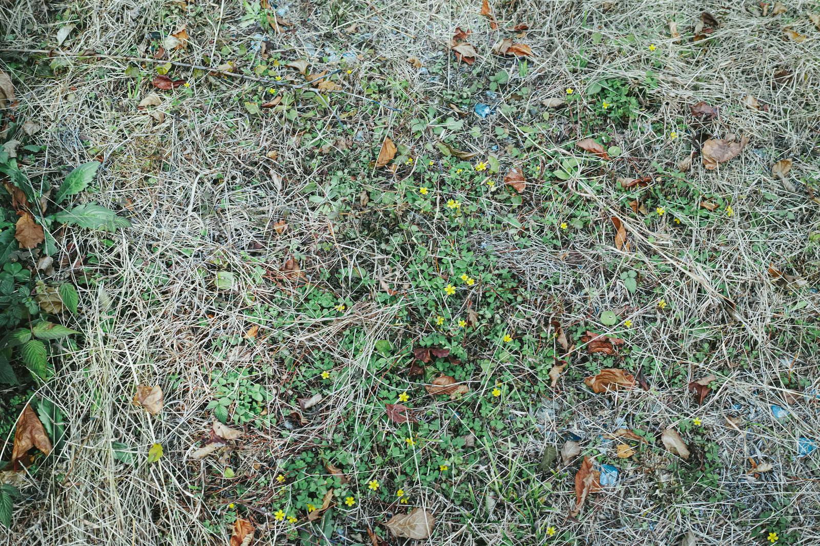 「枯れ葉散る地面と雑草(テクスチャ)」の写真
