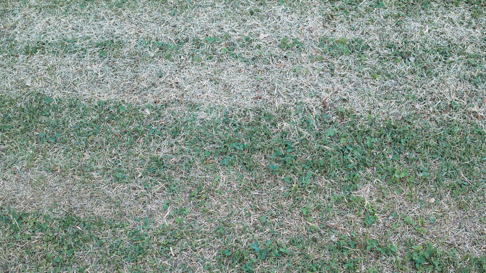 「二色のグラデーションが際立つ芝生」の写真