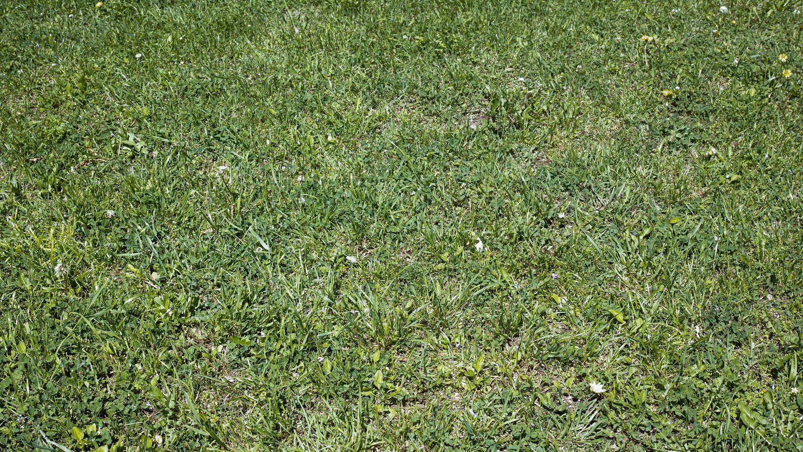 「手入れされた芝生のシンプルなテクスチャ」の写真