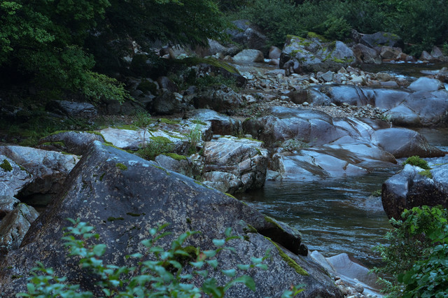 湿った渓谷の写真