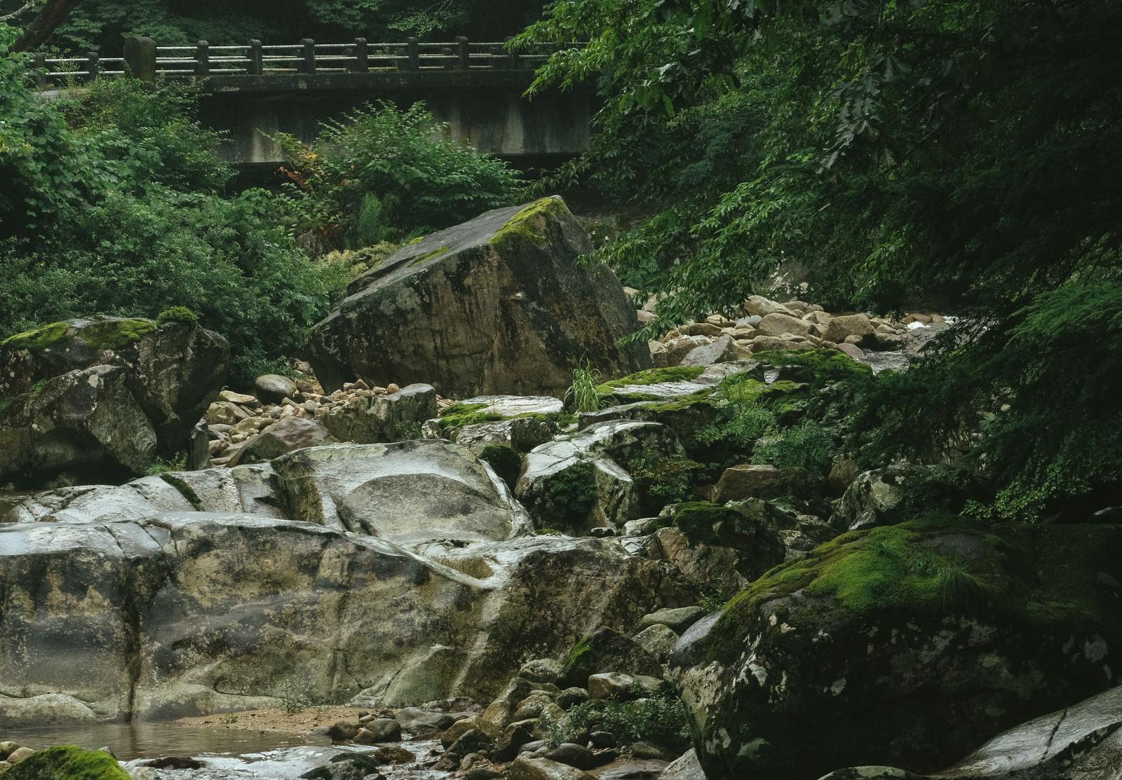 「河原より端を仰ぐ」の写真