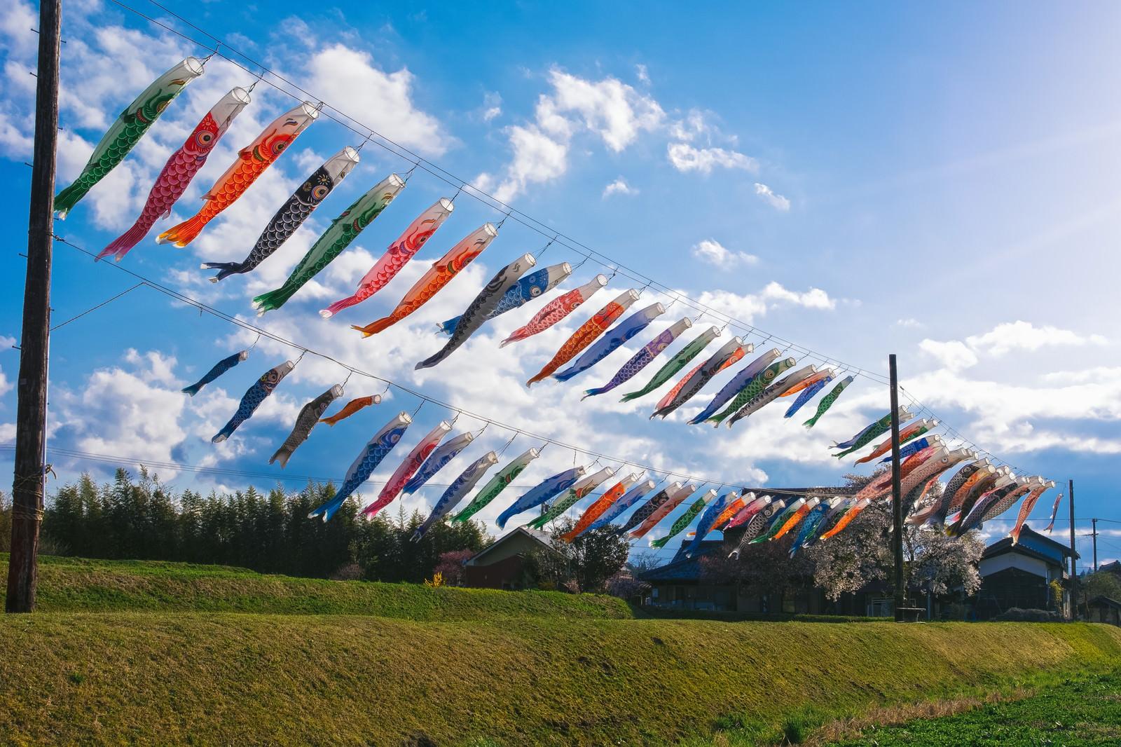 「岐阜県恵那市岩村町富田の鯉のぼり」の写真