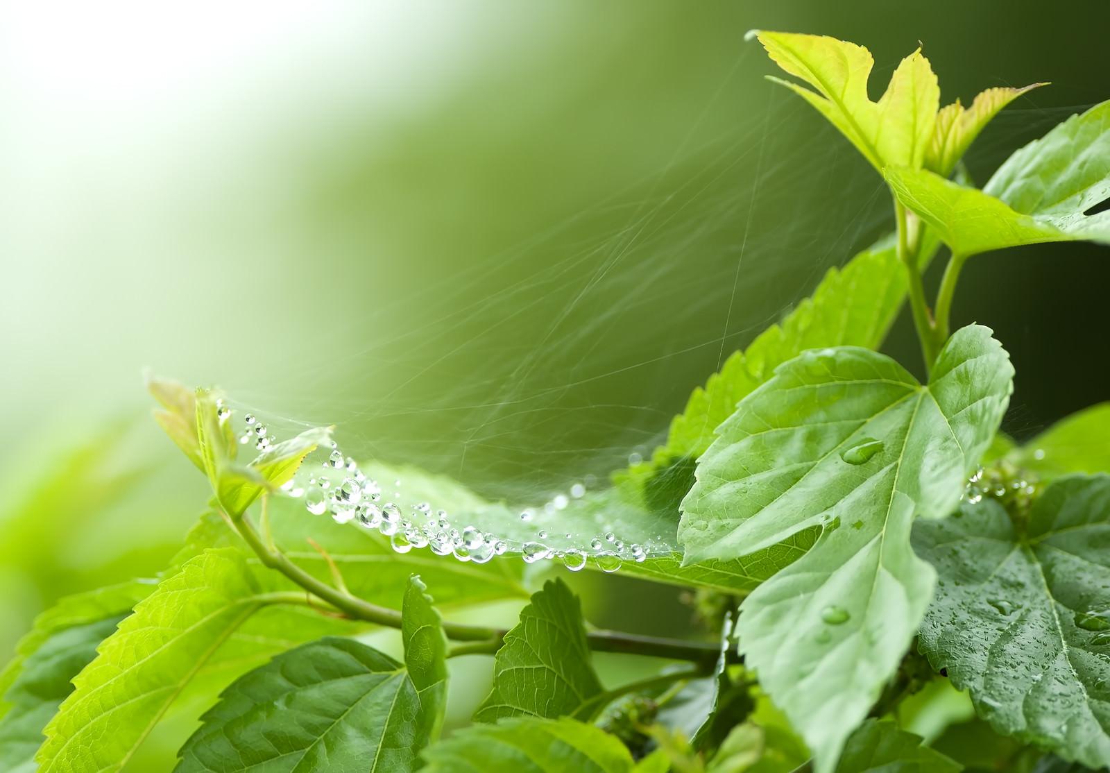 「蜘蛛の巣の雨粒蜘蛛の巣の雨粒」のフリー写真素材を拡大
