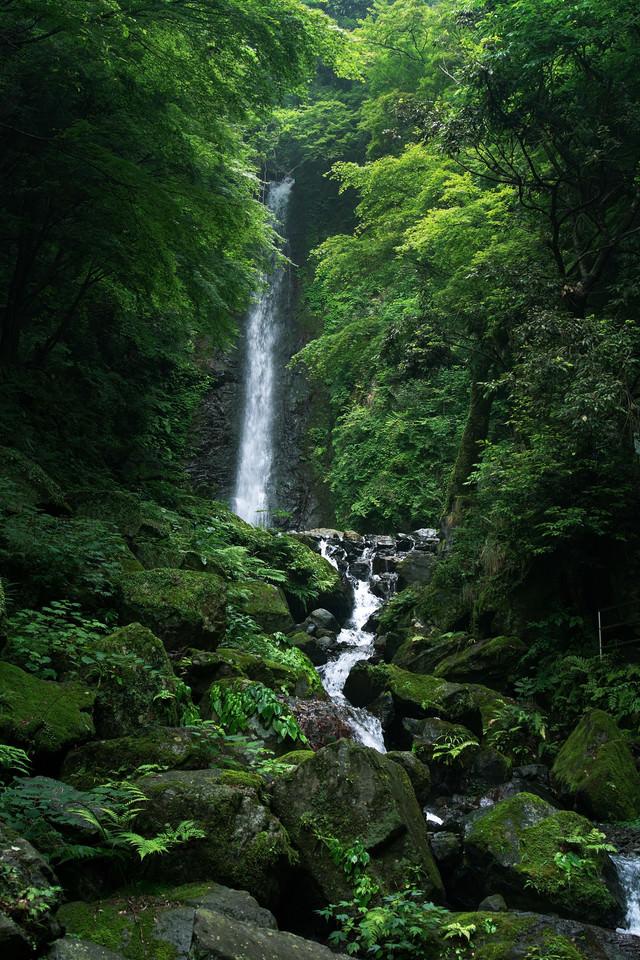 雨上がりの養老の滝の写真