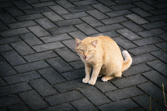 威嚇する野良猫の写真