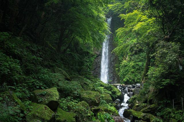 新緑に囲まれた養老の滝の写真